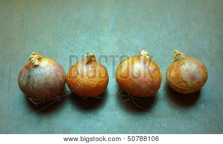 Onions on wooden table