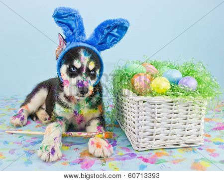 Easter Husky Puppy