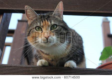 Cat stares into Camera