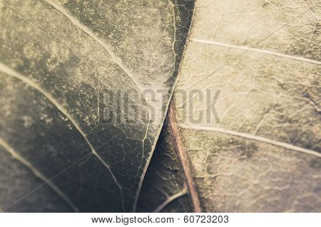 Macro Leaf Of Mango