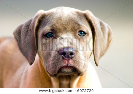 Dog Without Name