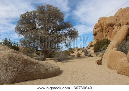 Dry Stream Bed in Joshua Tree National Park California