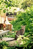 A sitting cat in backyard Hong Kong poster