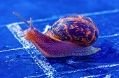 snail crosses the finish line as winner poster
