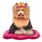 vector illustration of little Yorkshire Terrier sitting on pillow poster