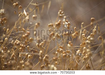 Grasses Natural Background