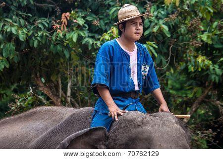 Mahout ride an elephant