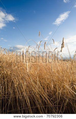 Crop Field Vertical