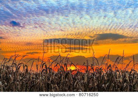 Indiana Sundown