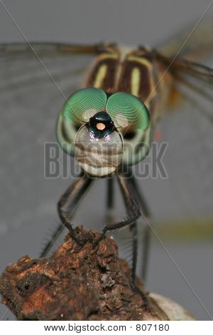 close-up dragonfly