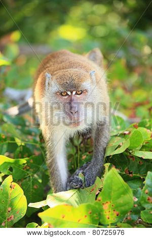 Monkey Going To Attack