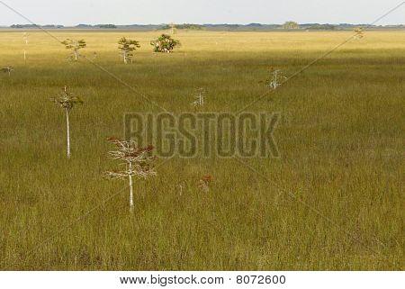 Everglades Landschaft