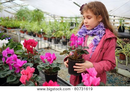 Girl in a pink jacket holding flower pot with cyclamen in the greenhouse