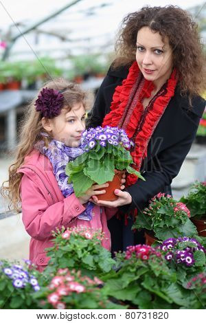 Little girl with mother holding pot with beauty cineraria in the greenhouse