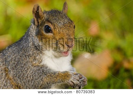 squirrel portrait in park
