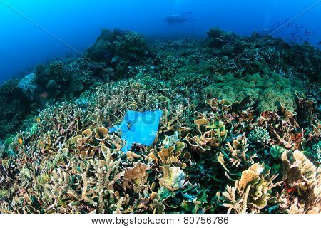 Discarded plastic bag on a coral reef