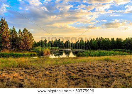 Lakeside Habitat At Sunset