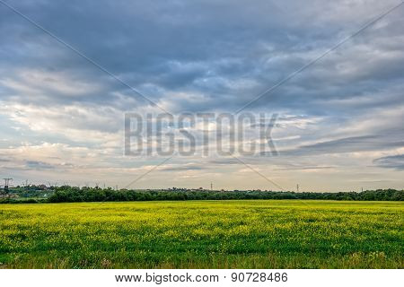 Meadow With Yellow Flowers And Cloudy Sky