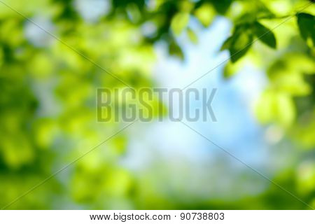 Defocused Foliage, Nature Background