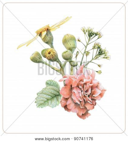 Composition Of Different Spring Flowers And Plants
