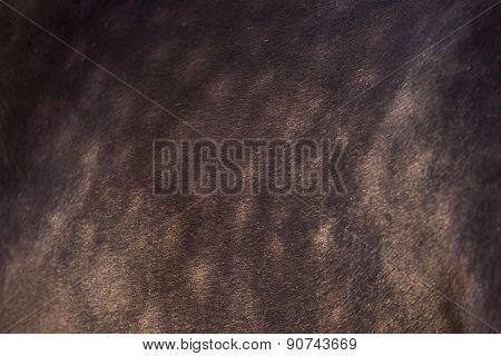 Beautiful Brown Horse