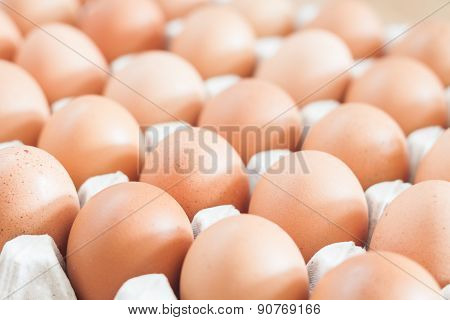Closed Up Fresh Chicken Eggs