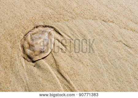 Small Jellyfish On The Beach At Close