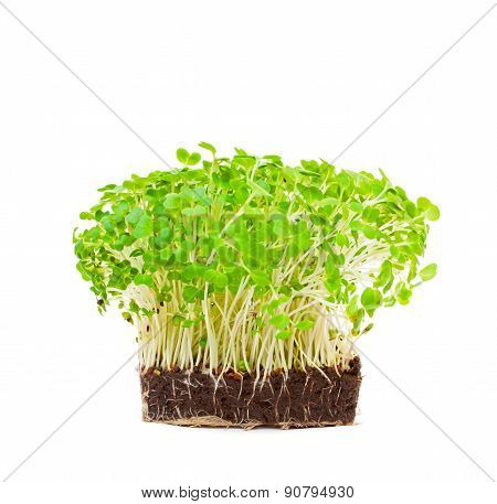 Cress Salad Isolated