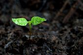 Green sprout growing from ground. Dewy young leaves sprouting plants. Spring background - garden. poster