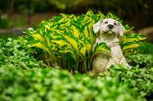 A small lawn ornament statue of a cute and happy small dog sits looking content amongst the lush greenery of a fertile garden. poster