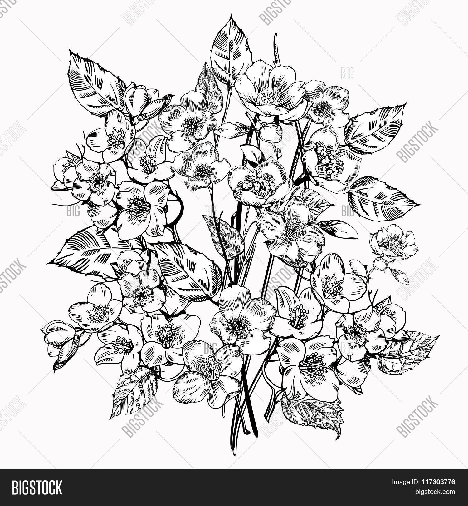 Jasmine Flower Vector Photo Free Trial Bigstock