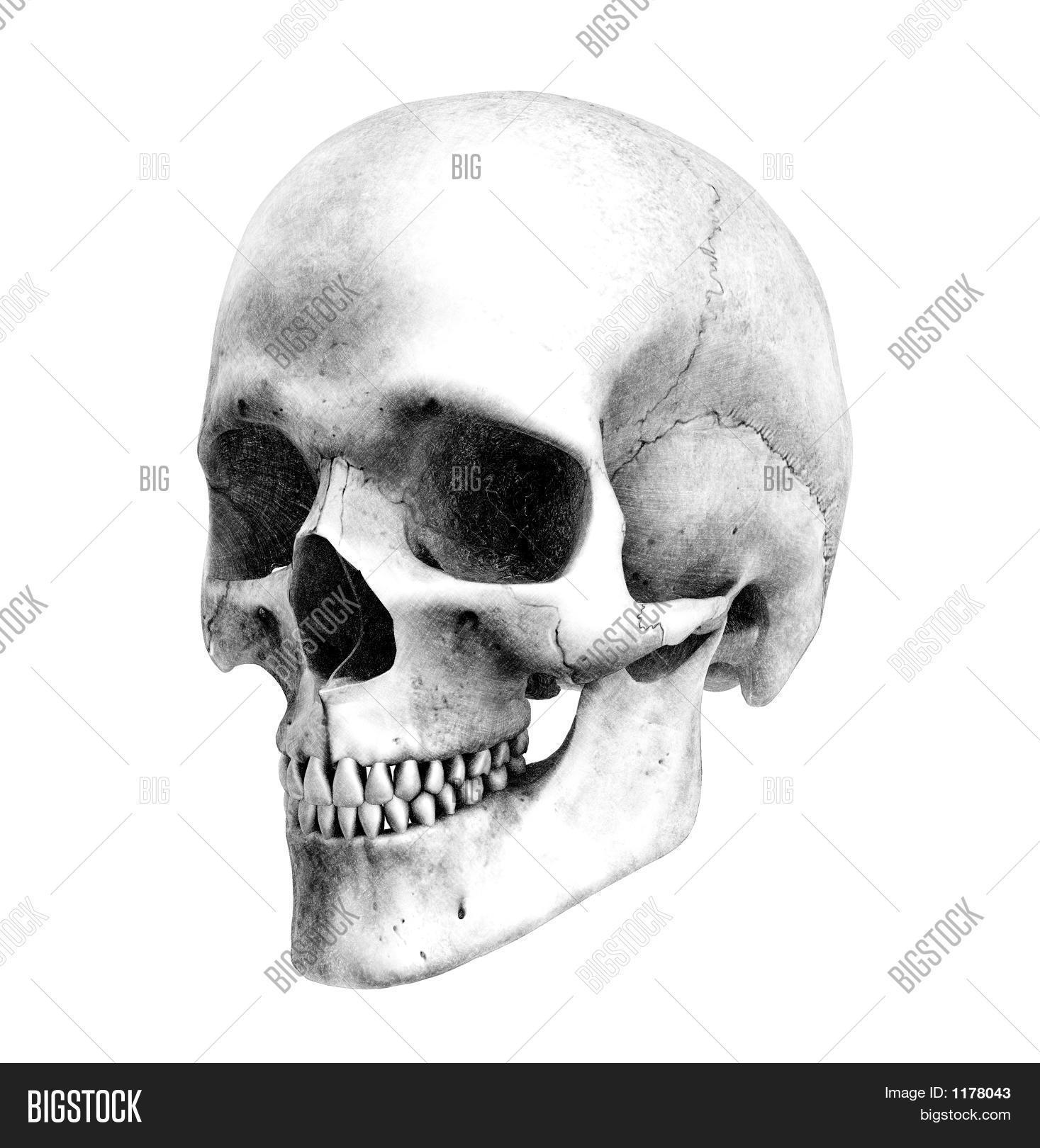 Imagen y foto Cráneo Humano - (prueba gratis) | Bigstock