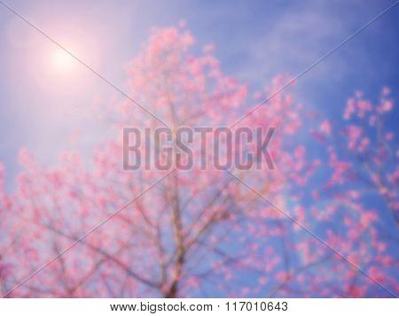 Pink Thai sakura branch