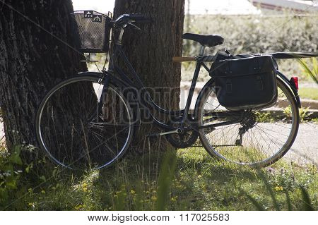 Vintage Like Bike Along A Tree Trunk