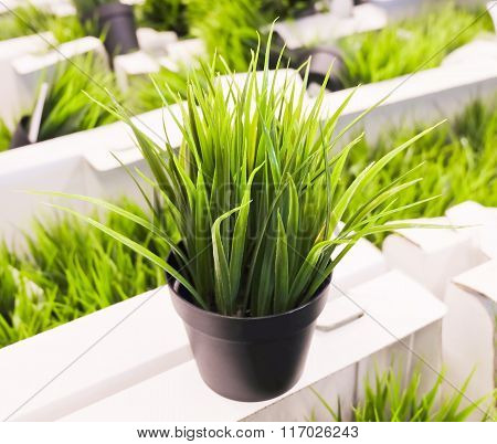 Artificial Green  Plant On White Cardboard Box
