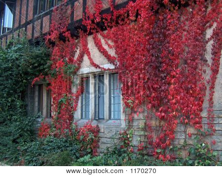 A Wall And A Window Covered With Autumn Red Foliage