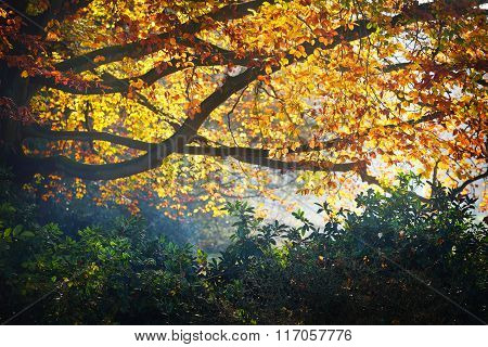 Beautifully lit tree branch with orange and yellow autumn leaves.  Nachtegalenpark In Antwerp