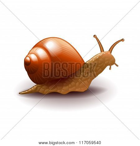 Snail Isolated On White Vector