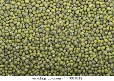 Harvest Of Mung Beans