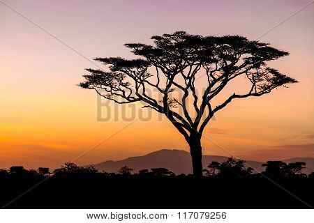 Sunrise In The Serengeti, Tanzania