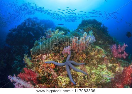 Fish coral reef sea ocean underwater
