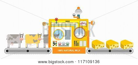 Production Of Cheese. Cheese Factory. Mechanized Process Of Cooking Dairy Product. Cow Goes To Produ