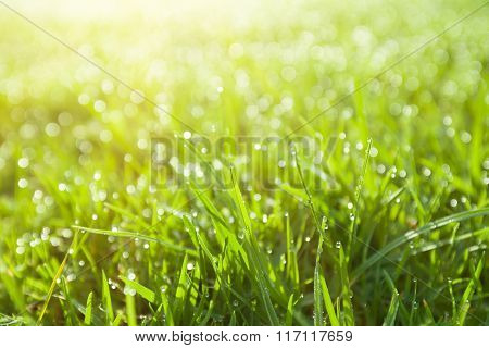 Extreme Closeup Of Green Wet Grass
