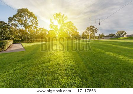 Wet Lawn With Trees In The Background