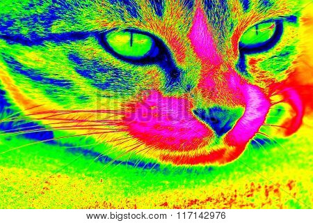 Infrared Thermovision Image Of The Cat Head Showing Surface Body Temperature