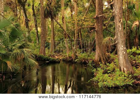 Scenic Kitching Creek