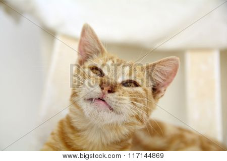 Angry cat with teeth outside