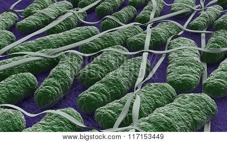 Under The Microscope, Salmonella Bacteria