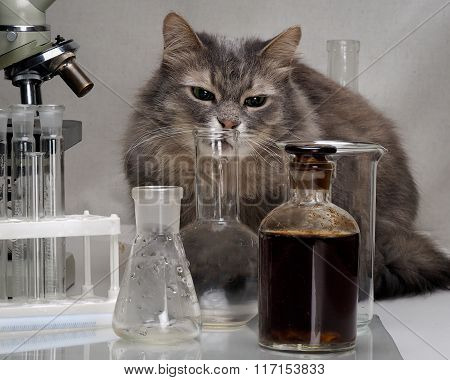 Cat in the chemical laboratory