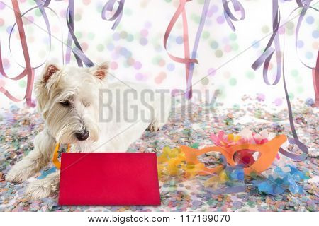 Westie Highland White Terrier looking at a message at Carnival Party time